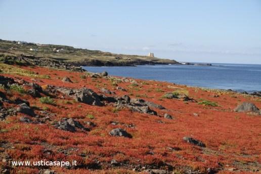 Ustica, Tappeto di erbetta spontanea in riva al mare