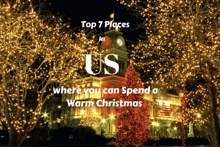 Oh Christmas Tree Americans Spend Over A Billion Dollars Annually On Xmas Firs