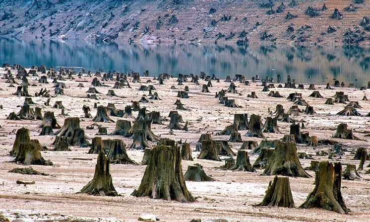 Old-growth forest cleared for dam in Oregon