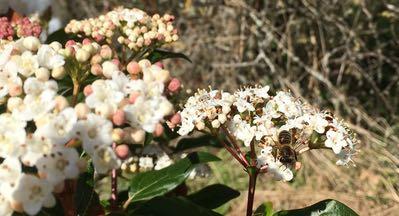 Utopaille abeille