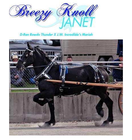 Breezy Knoll Janet