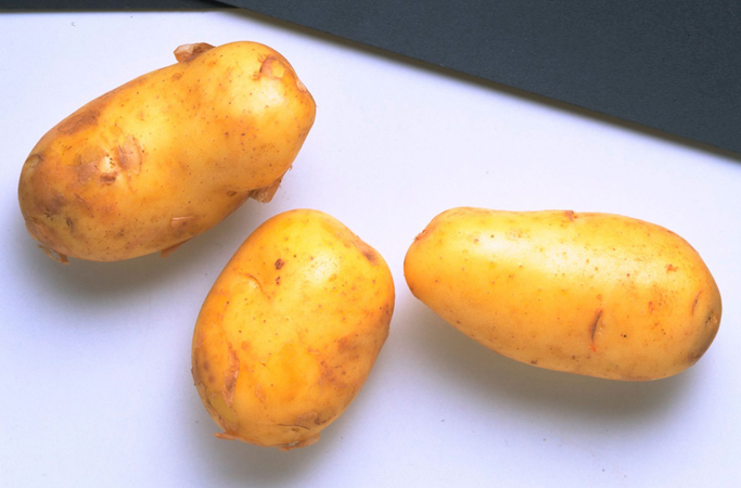 sta sve moze da se zamrzne- krompir