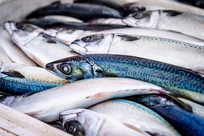 kako poboljsati vid - ribe