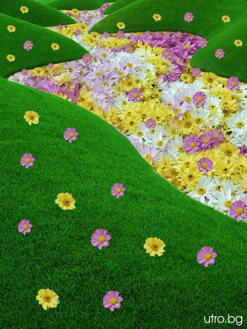river_flower
