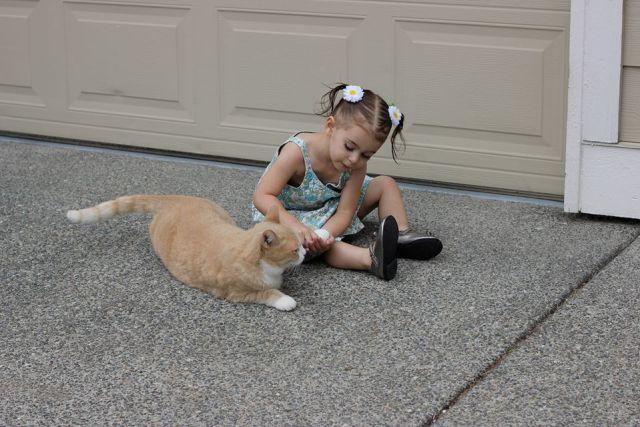 Ava-her Cat