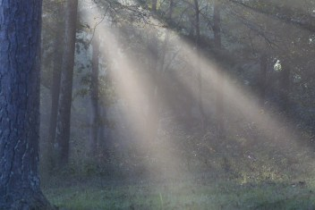 sun rays through forest mist