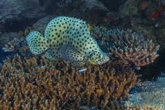 Palau-2017-Palau-Siren-3