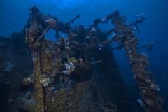 Palau-2017-Palau-Siren-50