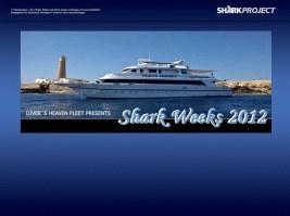 Shark Week 2012 Ägypten-75