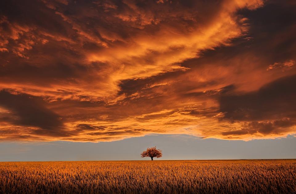 雲 木 夕日