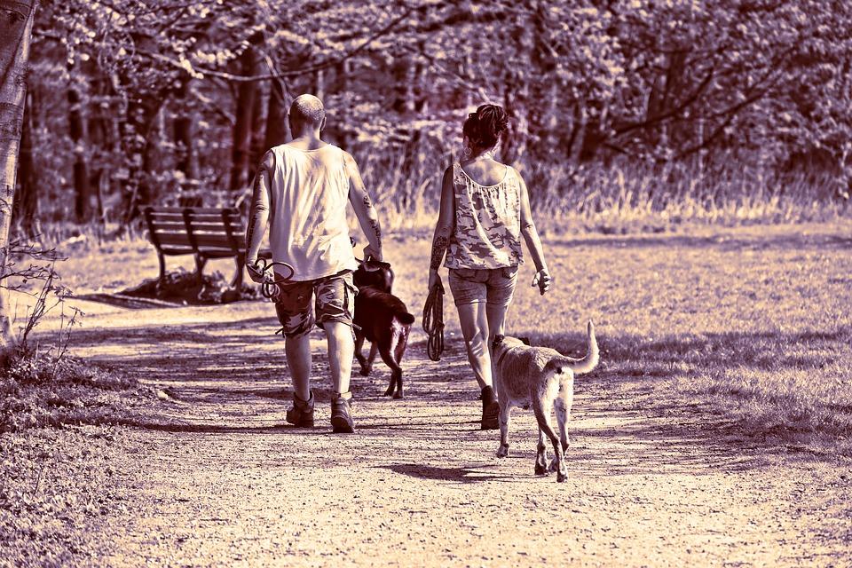人 男 女性 2 一緒に カップル 犬 家族の犬 犬の散歩 徒歩 運動 歩道 森林