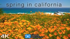 Spring in California: 4K 1 Hour Dynamic Real-Time Ambient Nature Film + Ocean Sounds for Relaxation