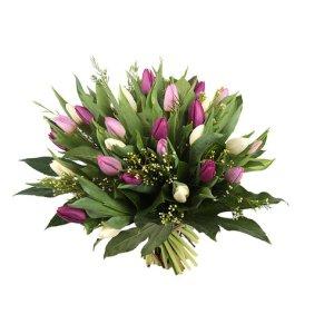 Pastel gemengde tulpen | Tulpen bezorgen | Uwbloemenman.nl