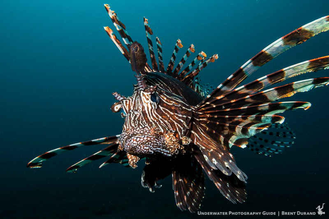 Canon G7X II Best Underwater SettingsUnderwater