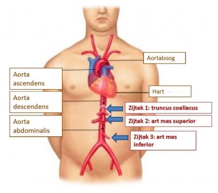 zuurstoftekort in de buik uza