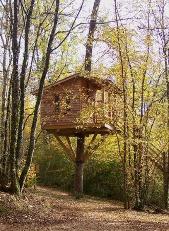 Construire Des Cabanes Dans Les Arbres Quelle