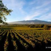 Arte e vino in cantina: degustazioni sull'Etna