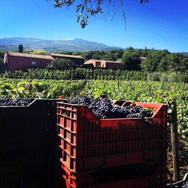 Visita trekking e degustazione vini sull'Etna versante nord