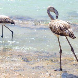 Pantelleria - Scrittura Creativa