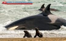 whale03