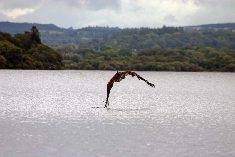 Birdwatching in Killarney