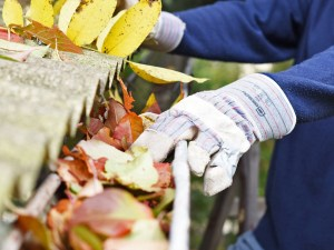 Fall cleaning 101 – 10 Steps to Having the Cleanest Home this Autumn