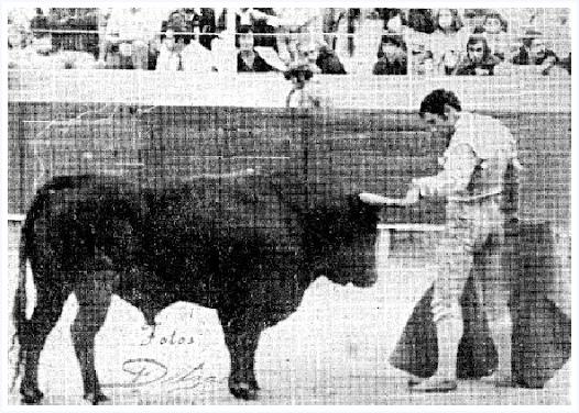José Salazar: el torero cordobés de Cantallops