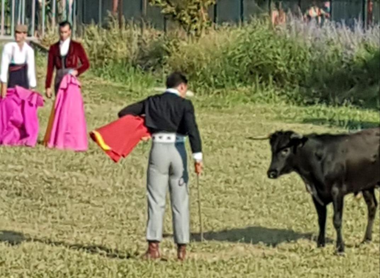 Manuel de Reyes toreja a camp obert