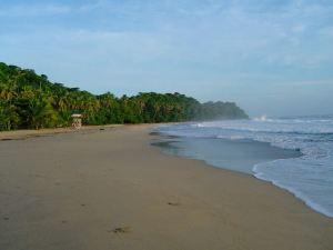 Tortelduiven in Costa Rica