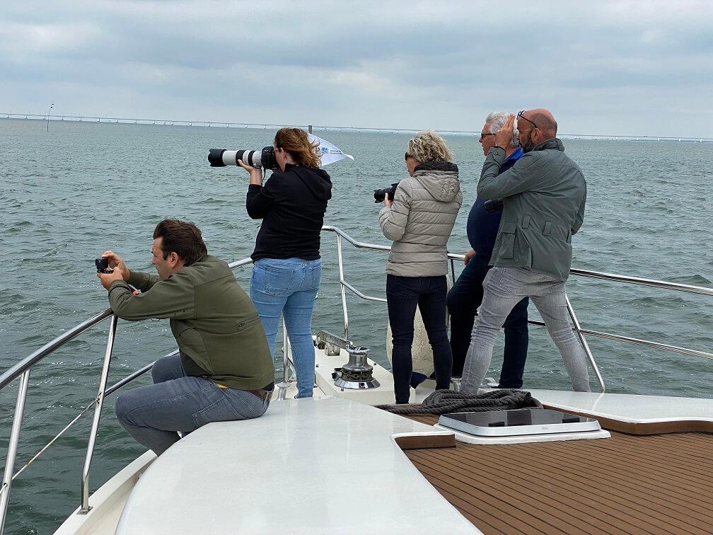 Zeehonden fotograferen vanaf de Amelia