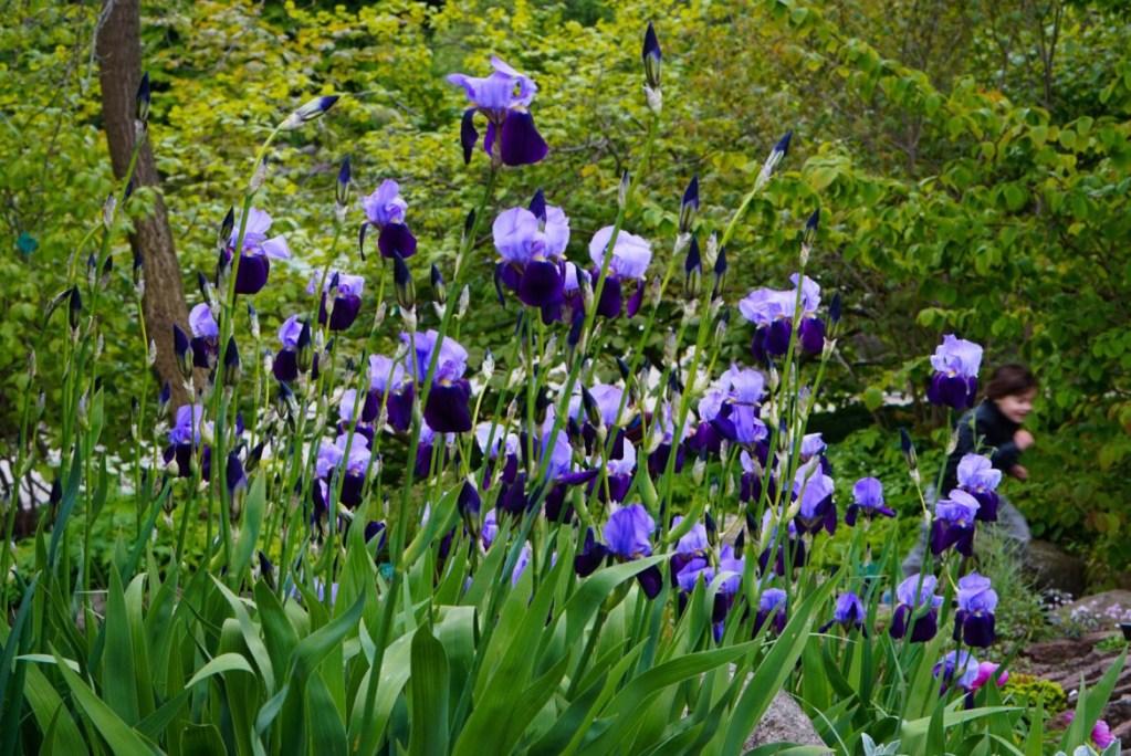 Suosikkipaikkani Kööpenhaminassa: Botanisk Have