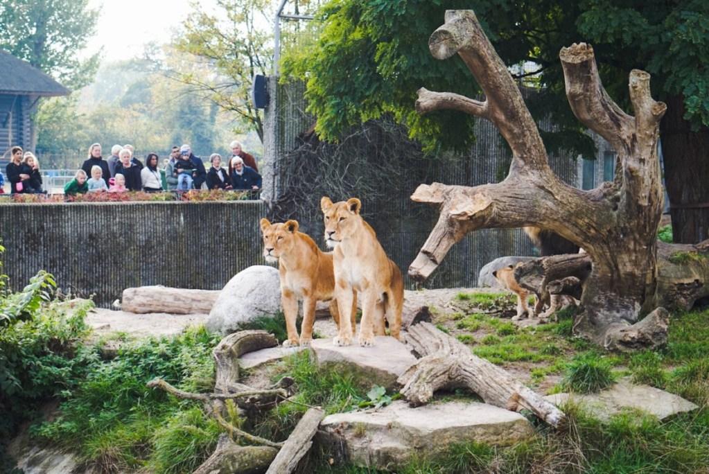 Kohuttu Kööpenhaminan eläintarha