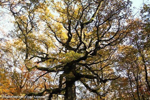 Broceliande Le chêne des Hindrés