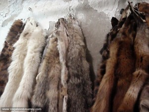 Animal furs for sale in Damascus