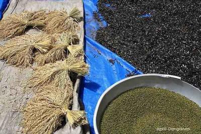Kalinga produce