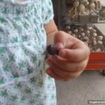 Hormiga Culona Hand