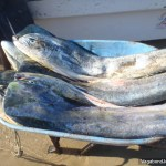 Fish Wheelbarrow