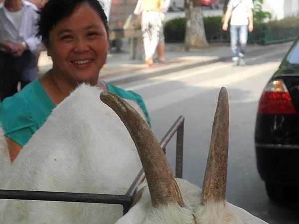 goat lady Xiamen