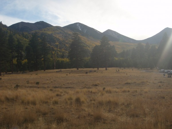 Lockett Meadow near Flagstaff Arizona