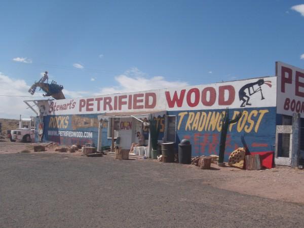petrified-wood-arizona
