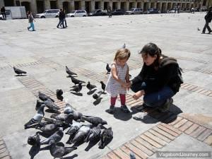 Pigeons in Park of Bogota