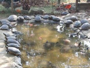 Turtles Mazunte