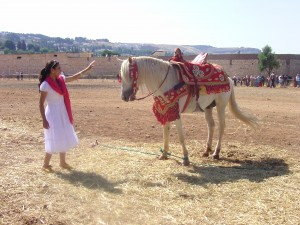 horses of Morocco