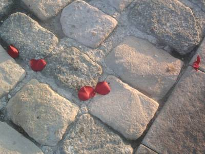 Rose petals on the ground Izmir