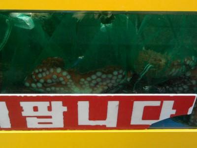 sokcho seafood