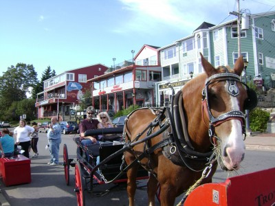 Nova Scotia horse and buggy