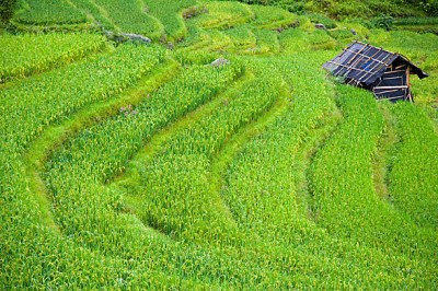 Rice Terraces Yao China Ping An