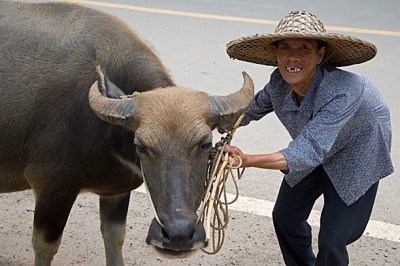 Yao woman and Buffalo, Ping An China
