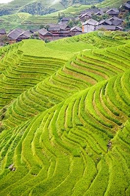 rice terraces in Ping An, China