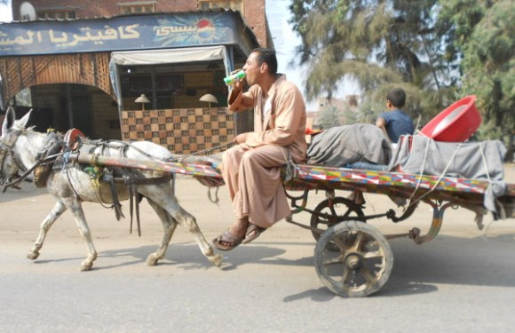 Cairo Donkey Cart – The Pepsi Challenge